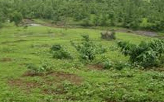 Land for sale in Ikoyi 3